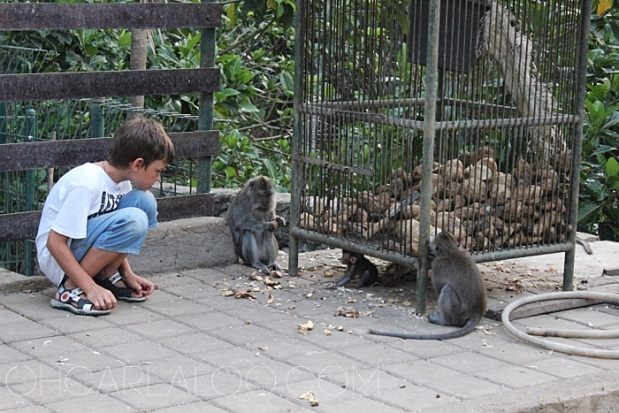 This young man caught our attention.  He was just staring so intently at the monkeys and the deer.  Then he started feeding each one.  Then he started coming to them this close.  And the slightly freaky thing is, the animals didn't show any shyness or retaliation from the interaction.